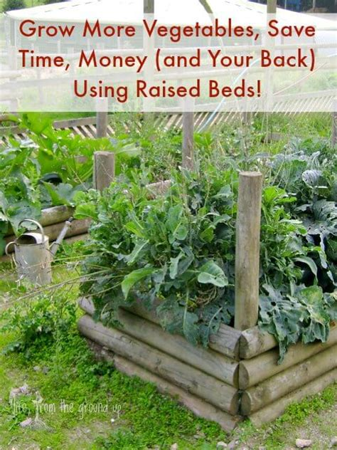 benefits of raised bed gardening the many benefits of raised garden beds