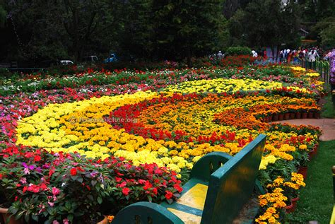 botanical gardens flowers ooty flower show 2015 photos gallery