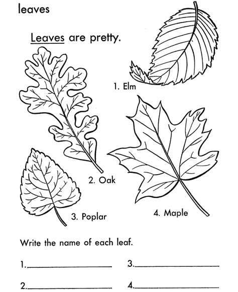 leaf coloring pages printable free printable leaf coloring pages for kids