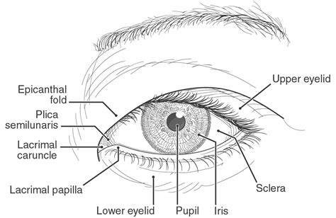 imagenes de ojos humanos y sus partes el ojo y las razas humanas blog de ojos innova ocular