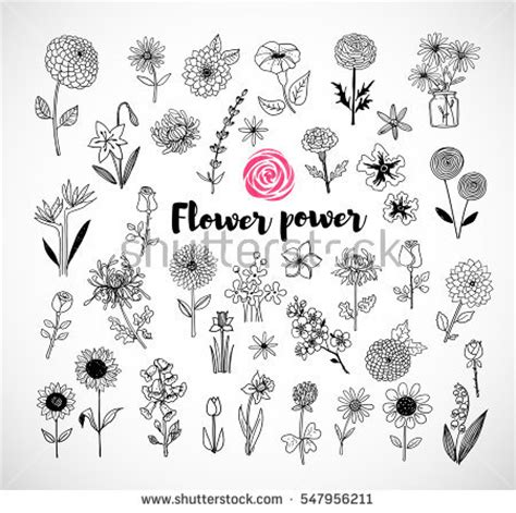 doodle sketch flower doodle stock images royalty free images vectors