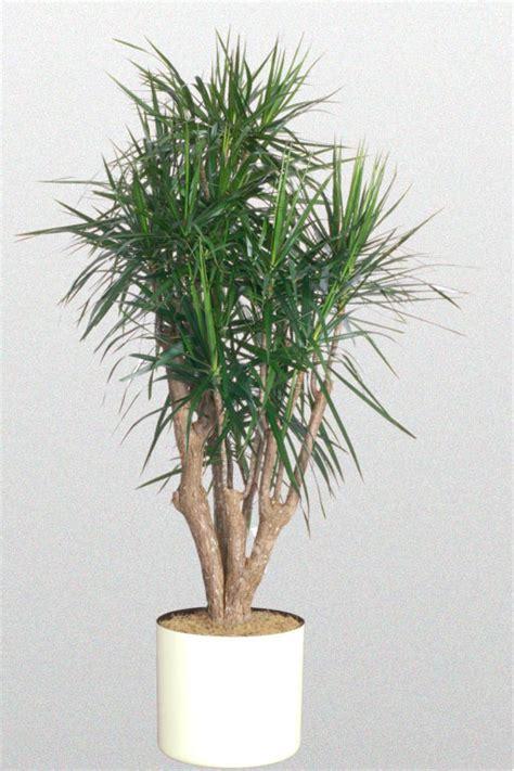 Decorative Floral Arrangements Home A Plant Affair Llc Los Angeles Leading Interior Plant