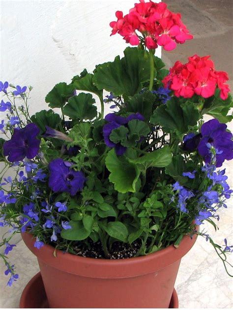 Annual Flower Planter Ideas Flower Planter Ideas