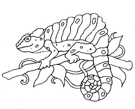 free animals coloring pages zoo to kids