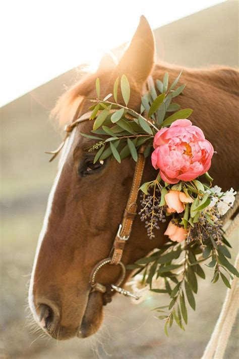 ruby roses dog instagrams will make you fall even more rustic glam ranch wedding inspiration ranch weddings