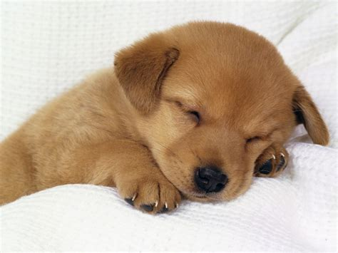 cutest breed puppy dogs photo 33237869 fanpop
