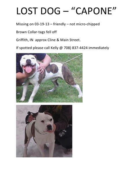 lost dogs illinois lost pitbull search results lost dogs illinois