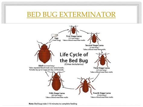 why do bed bugs come why do bed bugs come out at night 28 images image gallery night bugs so many