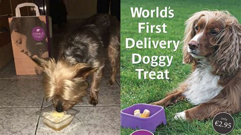 puppy delivery service dogs can now order takeaway thai food because this is 2016
