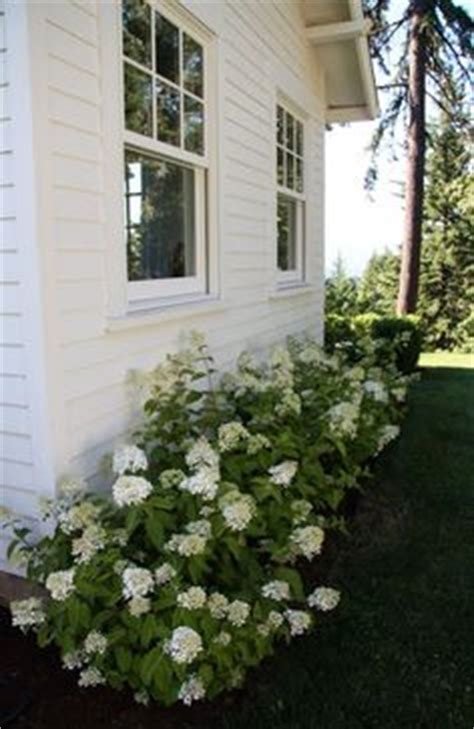 plants for side of house wooden houses on pinterest clapboard siding new england style and white houses