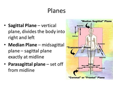 describe a parasagittal plane of section chapter 1 the human body ppt video online download