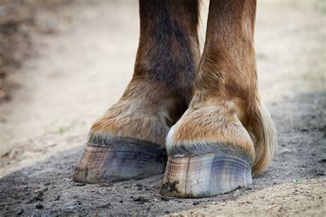 slew foot walking hoof crack in horses symptoms causes diagnosis