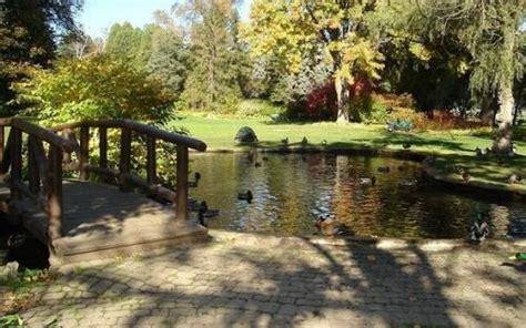 backyard duck pond backyard duck pond humber river pinterest