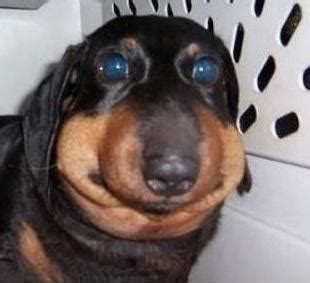 Derp Dog Meme - derp dog www pixshark com images galleries with a bite