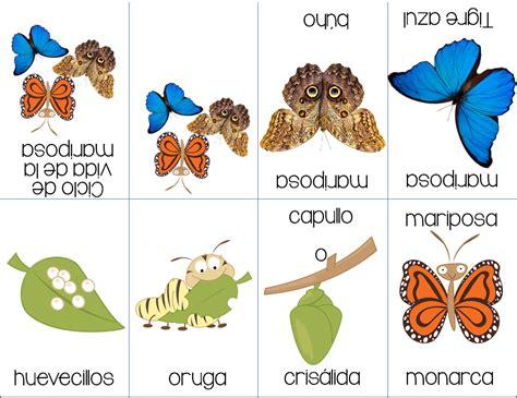 libro el monarca de las excelente mini libro del ciclo de vida de las mariposas educaci 243 n primaria cuzco