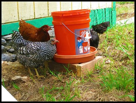 Backyard Chickens Waterer 17 Best Images About Backyard Chickens On Toys