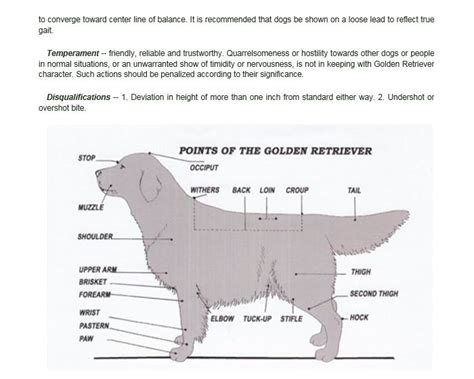 what breeds make a golden retriever golden retriever breed standard photo