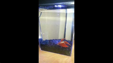 Do Betta Fish Need Light by Beautiful Betta Fish One Gallon Tank And Led