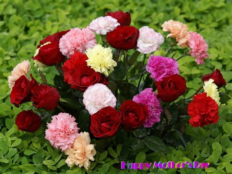 beautiful flower mothers day wallpaper beautiful flowers