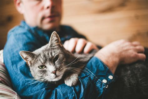 how to live like your cat books cat behavior 17 things your cat wants to tell you