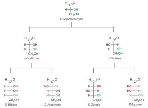 carbohydrates organic chemistry carbohydrates in organic chemistry organic chemistry help