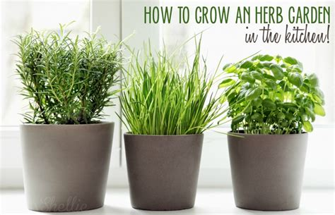 herb kitchen 5 ways to grow an herb garden in the kitchen