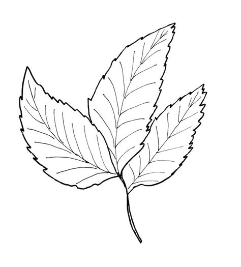 leaves pattern drawing 1000 images about leaf template outlines on pinterest