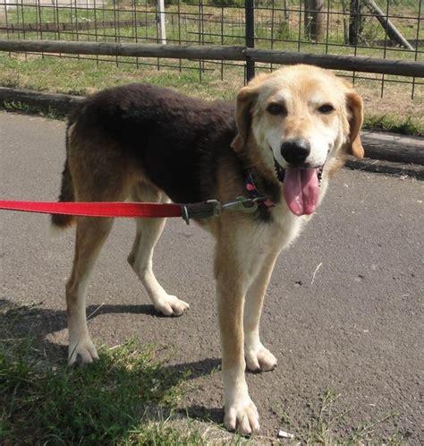 hunde aus deutschland suchen ein zuhause hunde aus italien suchen ein zuhause ein ganzes leben