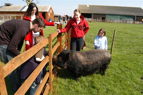 Look At That Farm Animals animals hardys animal farm