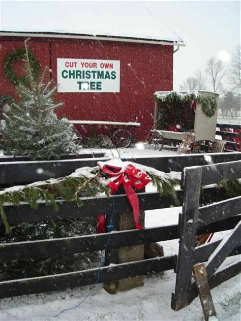1000 images about christmas evergreen farm on pinterest