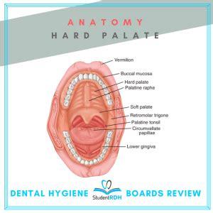 admin author at studentrdh dental hygiene board exams
