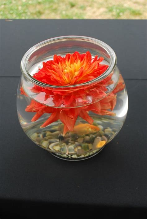 goldfish themes goldfish centerpiece ideas goldfish and dahlia