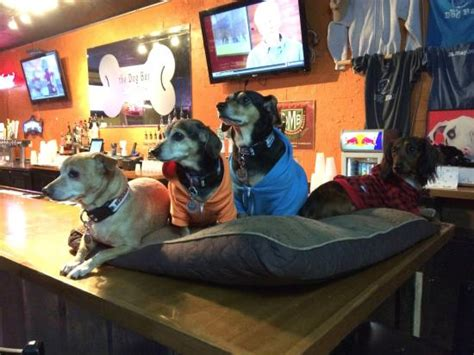 puppy bar trivia picture of bar tripadvisor