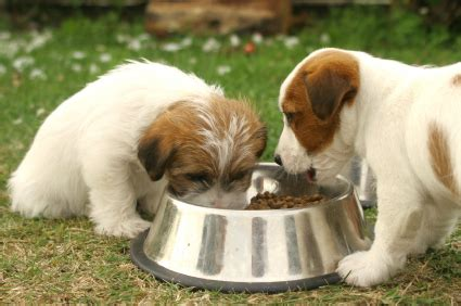 can dogs eat ground turkey tag archive healthiest food