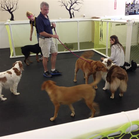 what to expect with a puppy daycare what to expect happy hound resorts