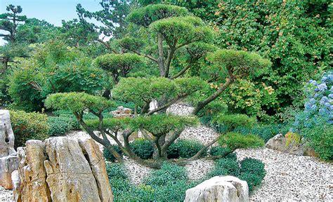 Pflanzen Für Kiesgärten by Kiesgarten Selbst De