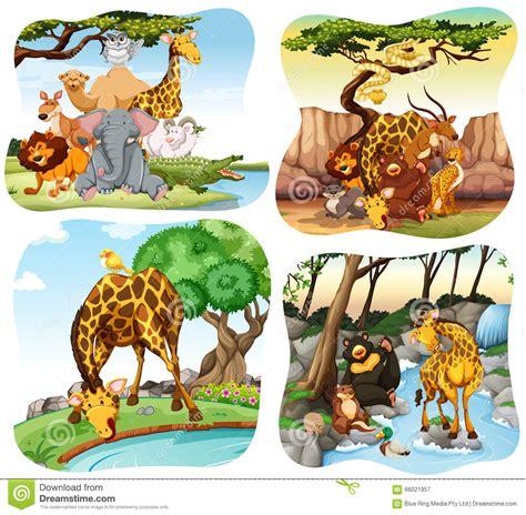 imagenes animales que viven en el bosque animales salvajes que viven en el bosque ilustraci 243 n del