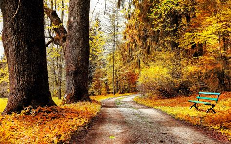 park autumn nature trees yellow leaves road bench