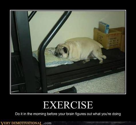 fat dog asleep on treadmill