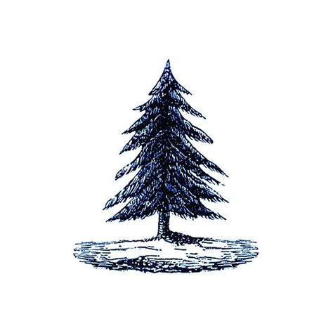tattly designy temporary tattoos pine tree by fiona
