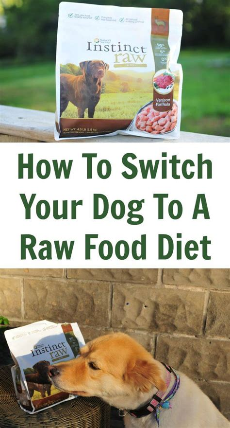 when to switch puppy to food how to switch your to a food diet