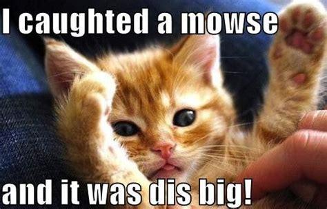 Funny Kitten Meme - cat mouse funny memes