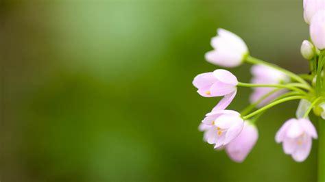 wallpaper kawaii flower photo collection cute and beautiful flower