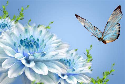 wallpaper for desktop butterfly butterfly wallpapers desktop wallpapers