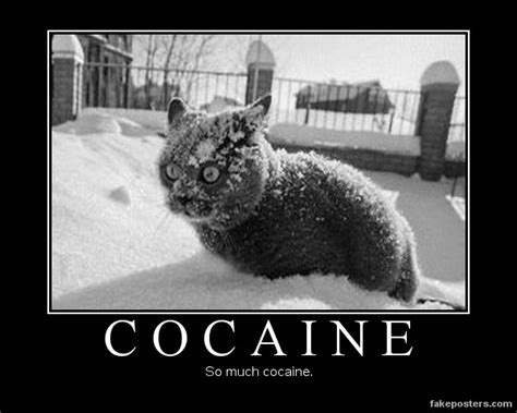 Cat Cocaine Meme - cocaine demotivational poster fakeposters com
