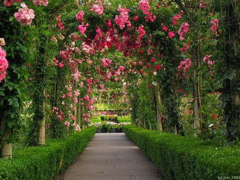 wallpaper free garden wallpaper desk rose garden wallpaper rose