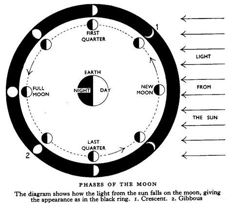 coloring pages of the moon s phases free coloring pages of moon phases