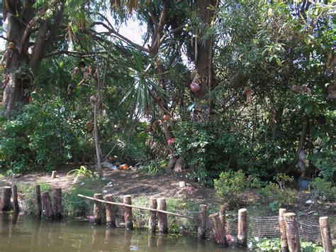 panoramio photo of la isla de las mu 241 ecas