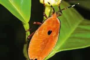 get rid of bugs in backyard 24 best foxglove spires garden images on pinterest