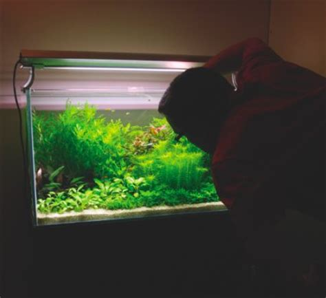 how to set up an aquascape how to set up a dutch style aquascape practical fishkeeping magazine